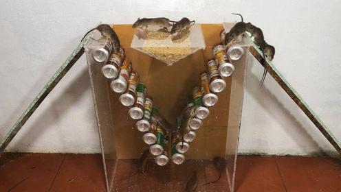 易拉罐做的捕鼠神器,简直是老鼠的噩梦