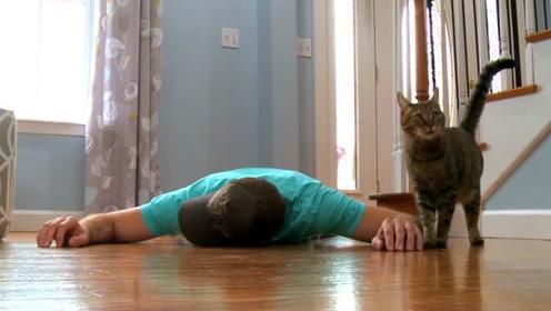 外国小伙装死试探猫咪,猫咪思考了一会儿,这是将计就计吗?
