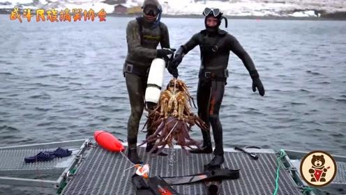 战斗民族的帝王蟹产量有多大?随便潜个水 居然能抓这么多