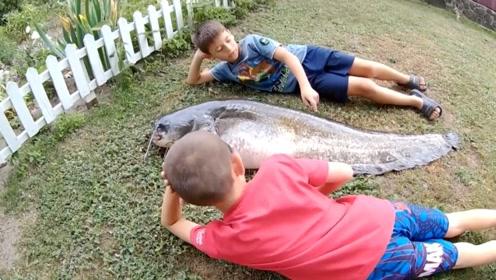 垂钓野生大鲶鱼的好饵料,许多钓鱼人不敢碰