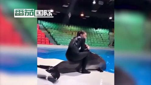 迪拜海豚馆女训练员骑海豚被指责虐待