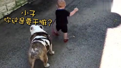 小家伙路都没走稳就要去遛狗,狗很无奈,接下来一幕把妈妈笑翻了