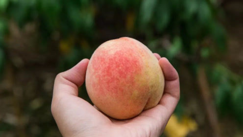 你经常吃桃子吗?现在看见为时不晚,尽早叮嘱家人,太重要了