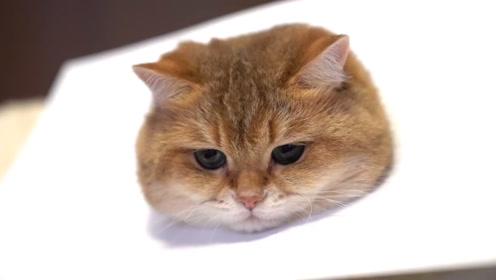 主人把猫咪画的栩栩如生,可仔细一看,差点就被骗了!