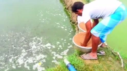 潜伏的够深啊   百万鲶鱼进食场面令人目瞪口呆