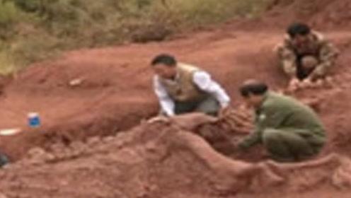 """老农深山挖笋,竟挖出一个""""龙墓"""",专家赶到后立即保护现场"""
