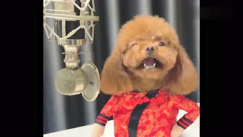 第一次见会唱歌的泰迪,真不可思议,网友:开什么国际玩笑!