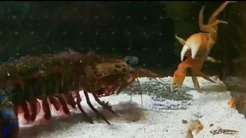 螃蟹:别录了行不行,虾哥别打了行不行,脑瓜子弹得嗡嗡的