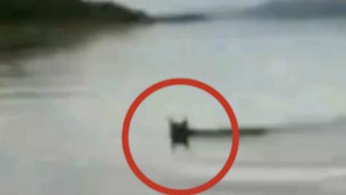 最萌偷渡客!黑龙江小伙目击猞猁从俄罗斯游到黑龙江:以为是狍子