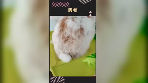 原来兔子的尾巴这么长