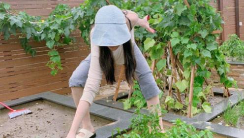 张馨予晒自己种的菜,而她摘菜的打扮被夸赞,网友:何捷捡到宝了