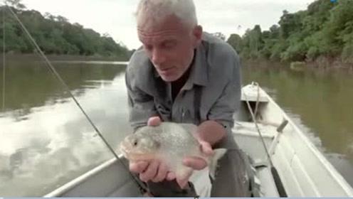 """食人鱼的牙齿有多厉害?看看老外的""""作死""""测试,太不可思议了"""