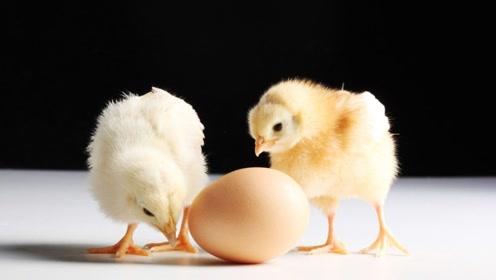 猪肉太贵,改吃鸡?毛利率暴增五成,民和股份上半年赚嗨了