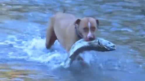 狗狗每天都带回一条大鱼,主人暗中跟踪发现不得了,这狗太厉害了