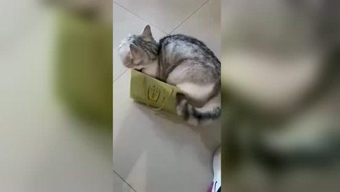 猫:自己多胖 心里没点数吗