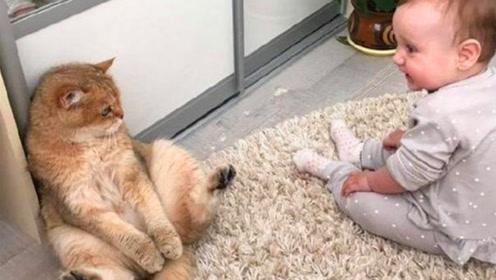 小宝宝和猫咪玩耍,场面温馨可爱又搞笑!