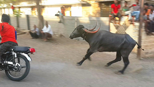 小伙骑摩托车挑衅印度神牛,二十秒后,现场不忍直视