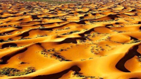 如果撒哈拉连续下30天的雨,结果会怎样?说出来你可能不信