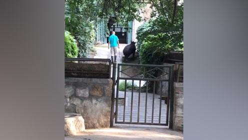 北京动物园一只貘不想回馆被饲养员抽打 园方:加强管理