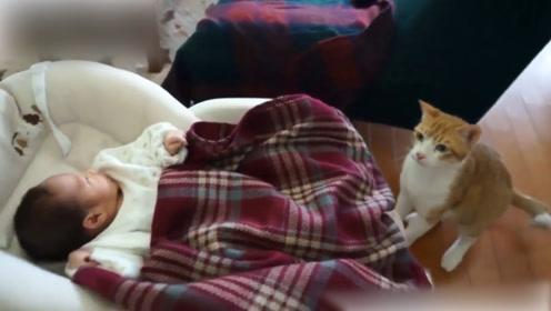 高冷的猫咪也性格改变,宝宝太可爱了,猫咪母性泛滥了?