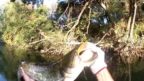 提竿就是一个凶猛的炸水,打了一个措手不及,还好在水里……