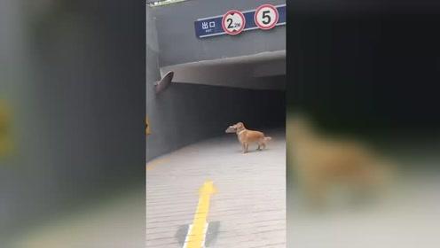 狗:我居然 我居然居然 是条狗