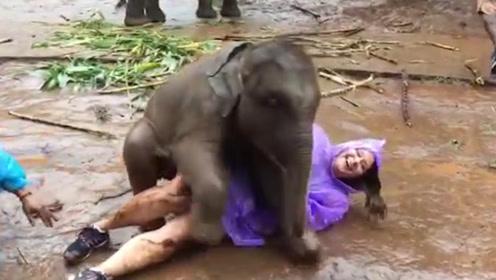 女饲养员给大象洗澡,洗着洗着大象就不正经了,镜头记录全过程!