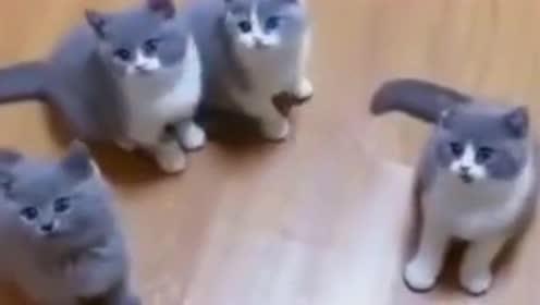 我们一起学猫摇,白爪猫们:那只不一样的灰胖子,别破坏了队形