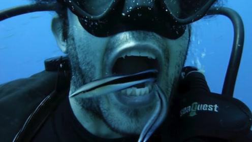 潜水员海底张开嘴巴,5秒后意外发生了,网友:这不是在作死?