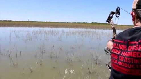 沼泽湖中发现一条超级大鱼,一箭过去水面瞬间沸腾了