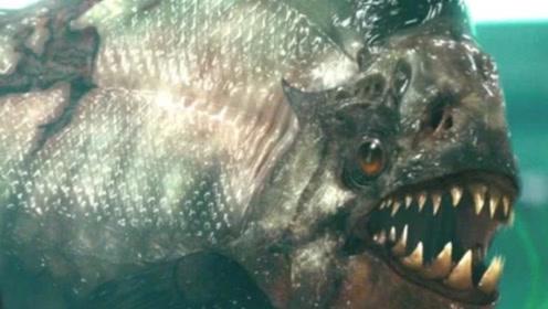 老外把食人鱼饿10天,把龙虾放进去,接下来发生的事意想不到!