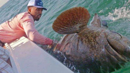 男子海边钓鲨鱼,结果大鱼吃小鱼,最后引来一个庞然大物