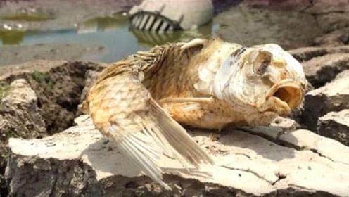 一条鱼离开水后,被晒成这样还能活,网友:鱼干成精了
