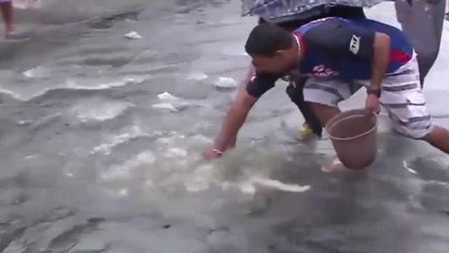 海滨城市下暴雨后还有这福利,下水道里到处是鱼,上街就能捡一堆