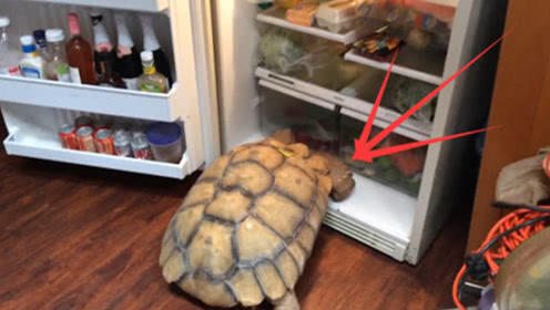 男子把乌龟放在冰箱里,4月后取出来,瞬间不淡定了!