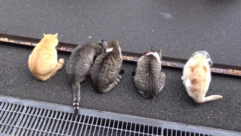 禅师捡了4只猫,30多只流浪猫上门碰瓷:明猫不说暗话,出家!