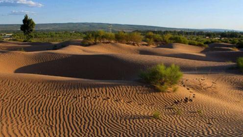 """全球首个被人""""干掉""""的沙漠就在我国,如今长满植物,惊艳世界!"""