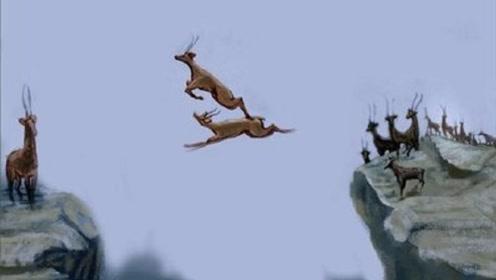 6只羚羊飞渡万丈悬崖,第6只才是王者,镜头拍下全过程!