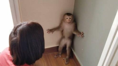 猴子闯祸,不满女主人教训和主人动起手来,女主人还打不过猴子