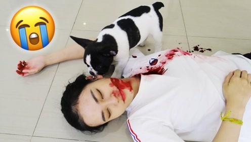 """美女在宠物面前""""装死"""",不料狗狗是个吃货,反应简直太尴尬"""