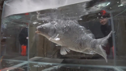 人掉进-200℃液氮里会怎样?扔条鱼进去看看,你就知道了!