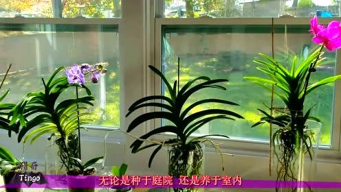 最昂贵的花,一朵售价1500万,网友:发现一朵吃喝不愁!