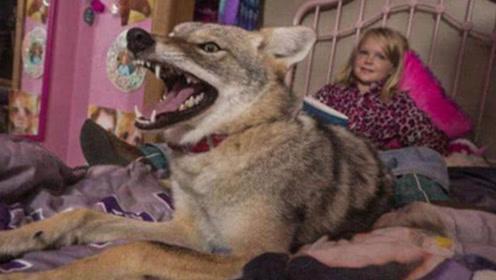 女孩捡回家一只流浪狗,养了3年才察觉,这狗越长越不对劲!