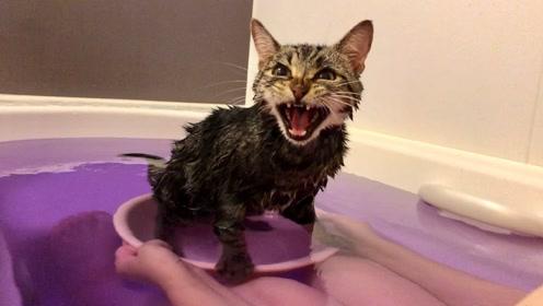 可爱小动物:小猫咪洗干净,哈哈