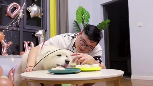 铲屎官深夜为萨摩耶手制月饼,狗狗:这么小的月饼我一口能吃十个