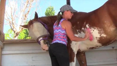 """美女在给马儿刷毛,刷着刷着马儿就不正经了,真是太""""无耻""""了!"""