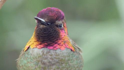 """这种鸟会""""川剧变脸"""",1分钟变出9张脸,不敢相信自己的眼睛"""