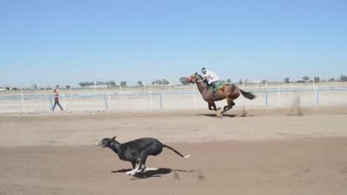 老外脑洞大开,让狗狗和马比赛跑步,谁会是最终赢家?