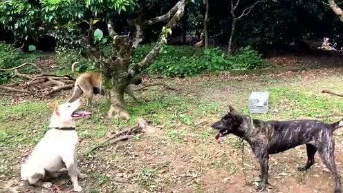 萌宠 农村大叔训练土狗如何捕蛇,其实好猎犬都是土狗训练出来的