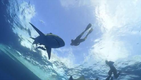 新婚夫妻蜜月潜水遇鲨鱼,没想到多年前的一个善举,救了他们的命